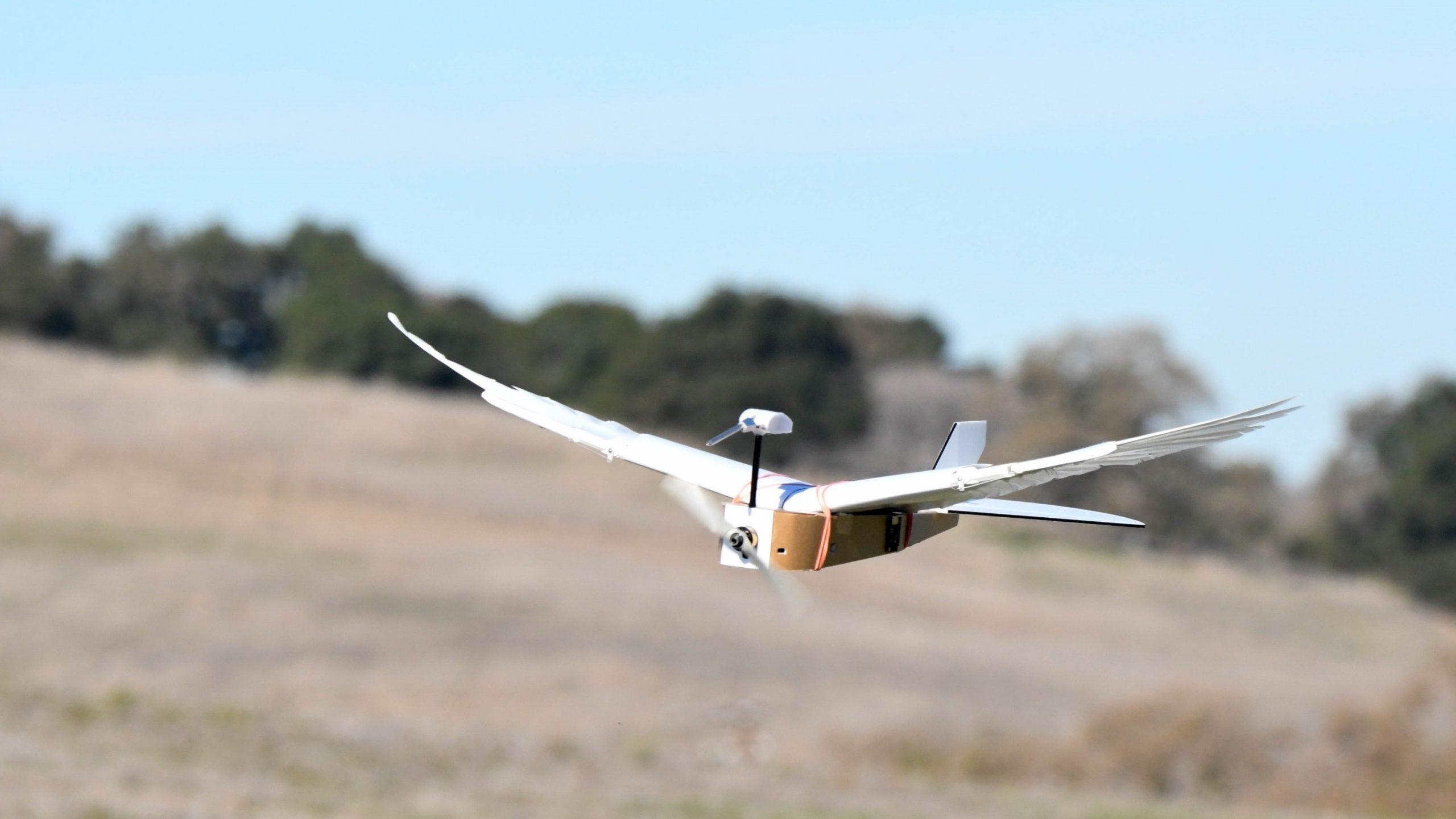 Zogu robot me pupla të vërteta fluturon me sukses – VIDEO